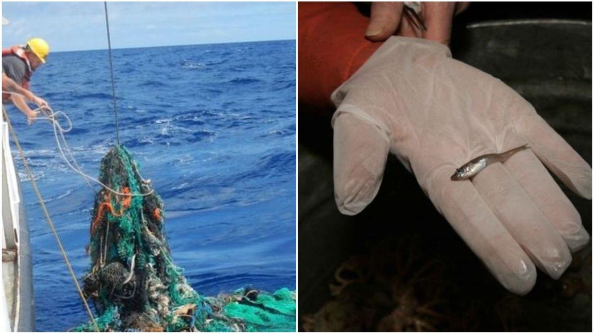 Jahmatav leid: Läänemerel leiti traalimise käigus plastiku seest kala
